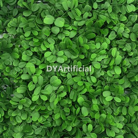 green color peanut leafs plant panel dongyi