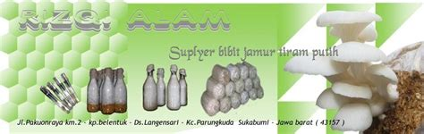 Bibit Jamur Tiram Bali budidaya jamur tiram yang ringan ringan tentang