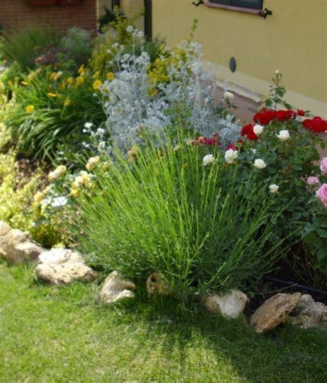 manutenzione giardini bologna trazzi giardini irrigazione potatura manutenzione