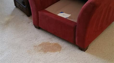 upholstery cleaning grand rapids mi carpet cleaners grand rapids meze blog