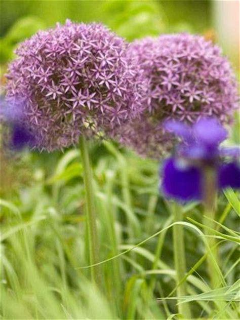 schonheit gardens