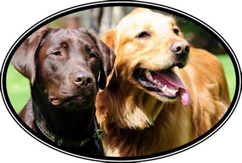 to freedom golden retriever rescue smart cookie donates a portion of proceeds to help labs golden retrievers smart