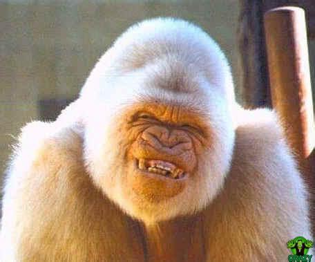 crazy frankenstein pictures crazy smile