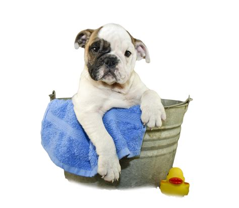 dogs bathtub bath www imgkid the image kid has it