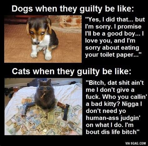 Cat And Dog Memes - dogs vs cats with quotes quotesgram