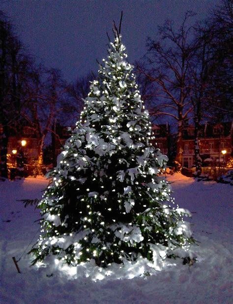 outdoor tree lights furniture walpaper