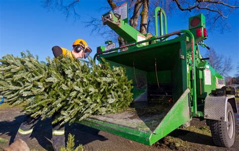 photos annual christmas tree chipping