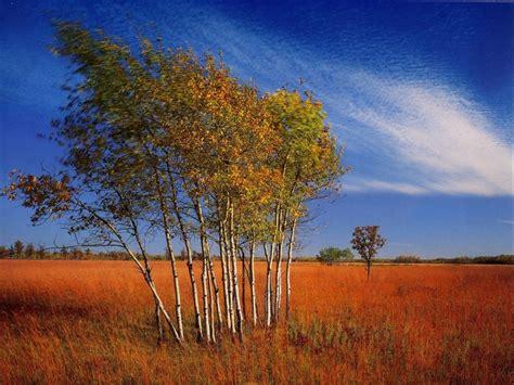 Home Design Do It Yourself tallgrass aspen parkland in minnesota usa free nature