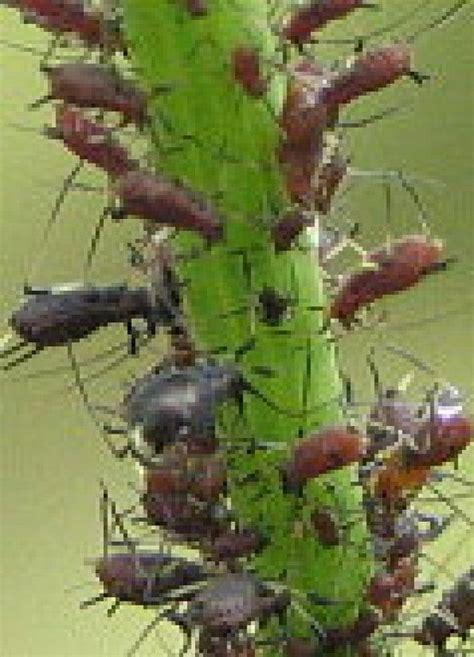 imagenes jardines otoño m 225 s de 1000 im 225 genes sobre jard 237 n en pinterest plantas y