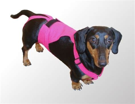 diapers for dogs in heat the world s catalog of ideas