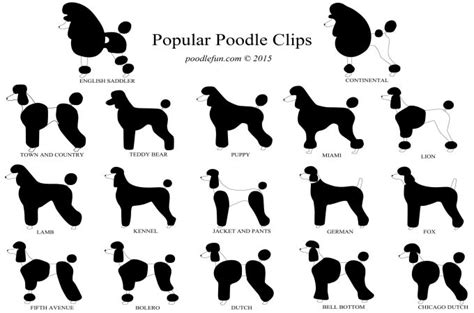 show each sprt cut to get a layer bob hairdo popular clips and haircuts for your poodle what is the