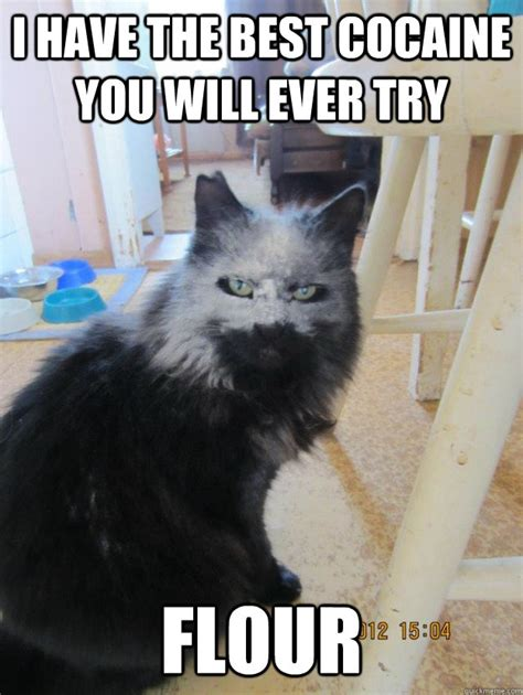 Cat Cocaine Meme - i have the best cocaine you will ever try flour cocaine