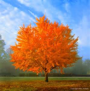 factory direct remodeling of atlanta 10 best trees for
