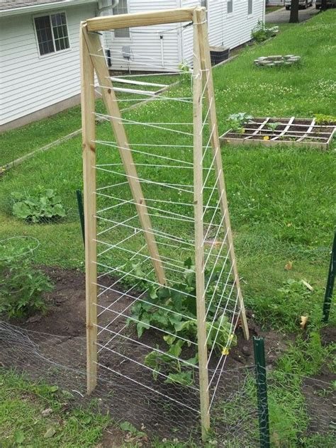 best way to trellis cucumbers cucumber trellis outside home sweet home