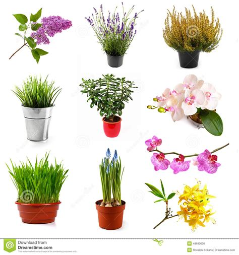 collection with different flowers and plants isolated on white stock photo image 49690630