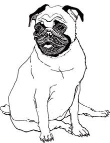 pug coloring pages baby pug coloring pages