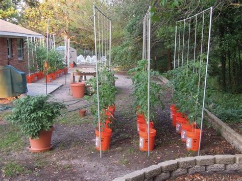 Tomato Garden Ideas Tomato Trellis Garden Digs