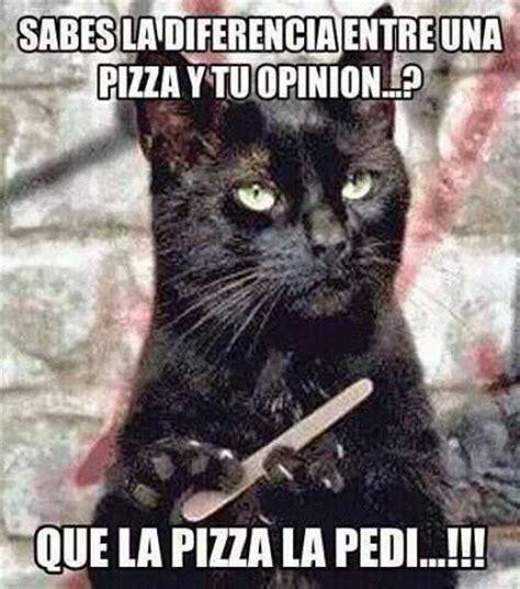 imagenes hola que ta chendo las 25 mejores ideas sobre memes de gato en pinterest
