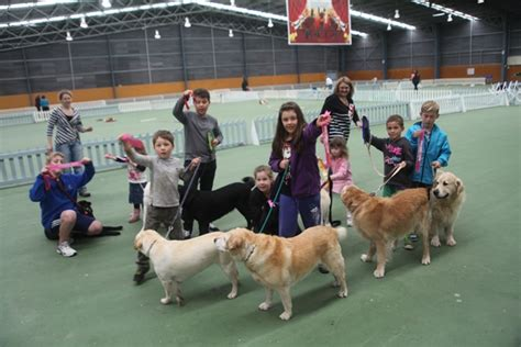golden retriever breeders nz golden retriever club nz photo