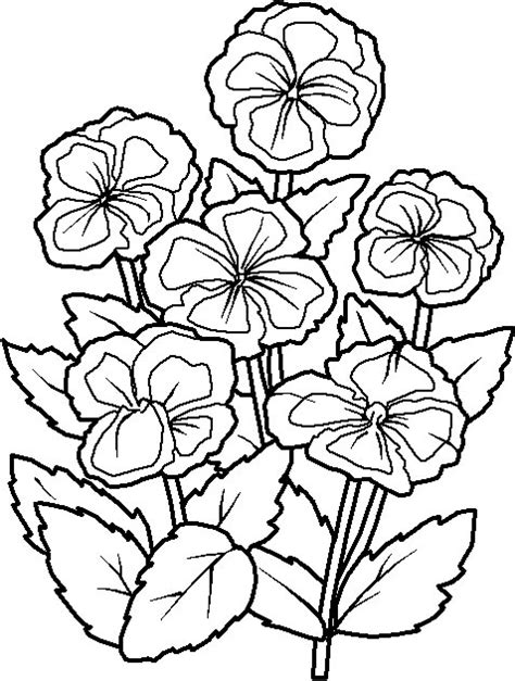 coloring pictures of beautiful flowers amazing coloring pages flowers printable coloring pages