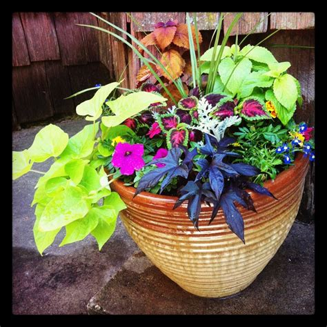 Summer Planter Ideas by Summer Planters Urn And Planter Ideas
