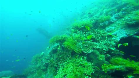Gopro 4 Bali quot amazing bali scuba diving quot with quot gopro 4 silver quot at quot uss liberty quot