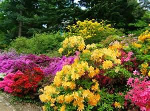 rhododendron garten rhododendronpark in dresden wachwitz die infoseiten de