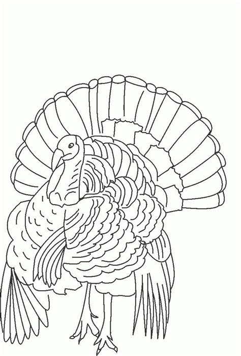 printable wild turkey picture wild turkey coloring page coloring home