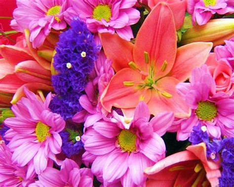 flower wallpaper cave colorful flowers wallpapers wallpaper cave