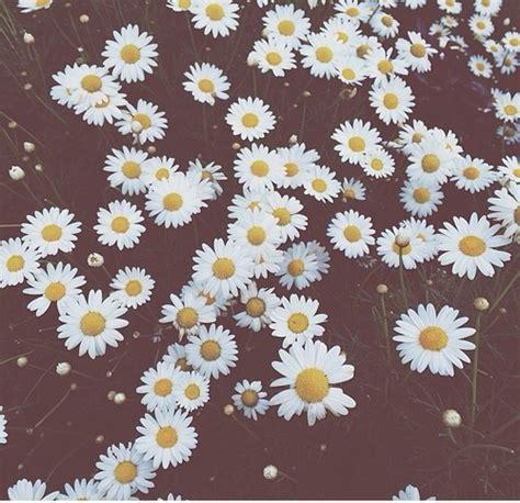 wallpaper tumblr daisy daisy flowers iphone wallpaper tumblr tumblr photos
