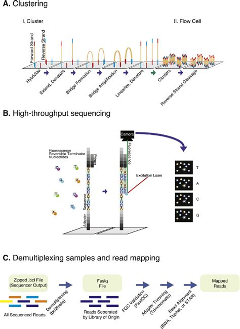 illumina sequence illumina sequencing and data processing workflow a
