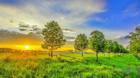 nature sunrise field green grass trees sky hd wallpaper