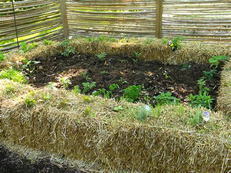 Hay Bale Garden by 11 Pictures To Start Vegetable Gardening In Hay Bales