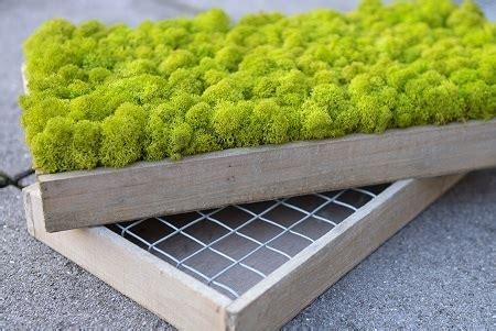 mooswand selber machen moosbild und mooswand selber machen selber bauen und