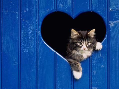 wallpaper anak kucing imut kucing lucu animal planet
