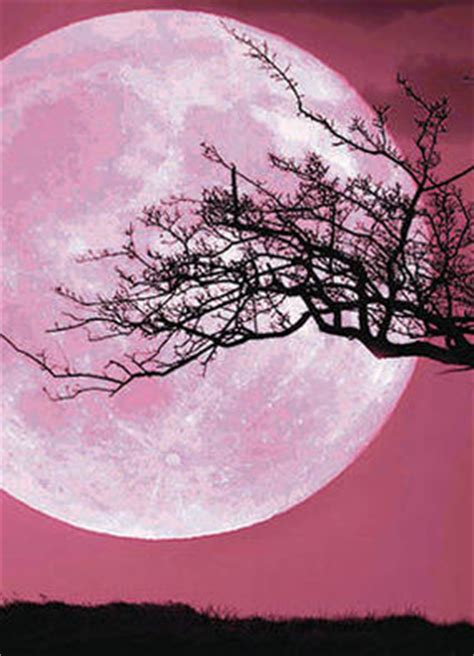 pink moon meaning space latest news pictures discoveries and theories