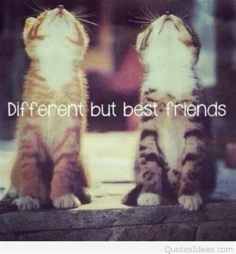 friends image  animals  quote