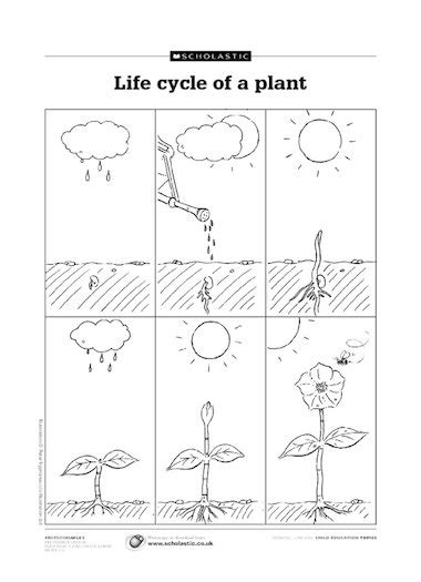 Galerry free printable worksheets on plant life cycles