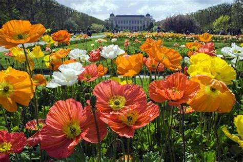 Plantes Et Jardins by Jardin Des Plantes Mus 233 Um National D Histoire Naturelle