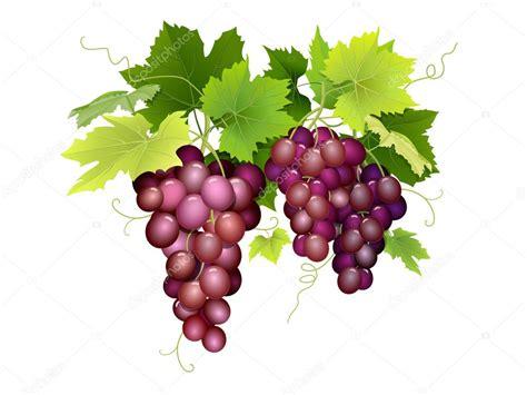imagenes de uvas vector tres racimos de uvas colgando vector de stock