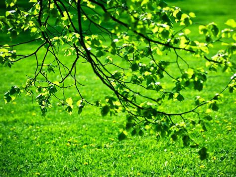 imagenes hojas verdes hojas verdes green leaves fotos e im 225 genes en fotoblog x