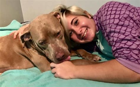 ptsd service cost rescue comes to the aid of with ptsd by giving cuddles