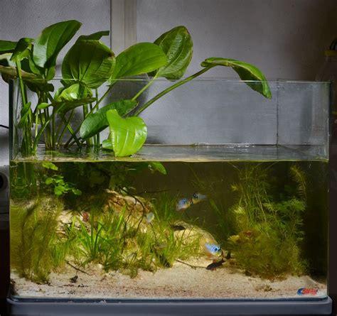 aquarium design competition biotope aquarium design contest 2013 quality test results