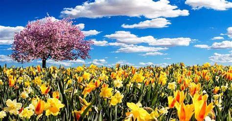 bildergalerie die  schoensten fruehlingsbilder  whatsapp senden freewarede bild