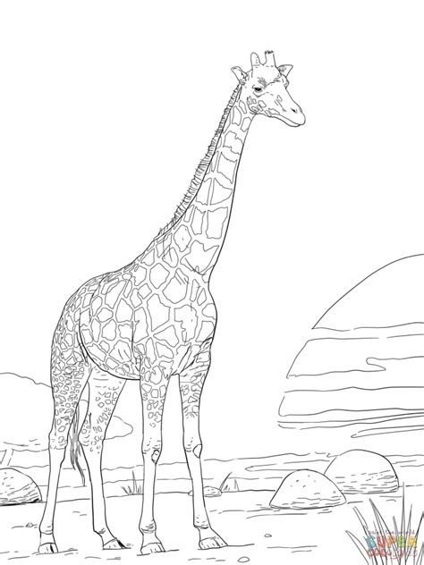 giraffe coloring page for adults get this realistic giraffe coloring pages for adults 74916