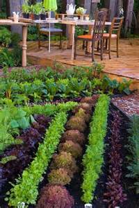 Edible Garden Plants by Edible Garden Plants Photos