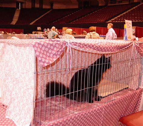 cat show drapes making cat show cage curtains showcatsonline com the