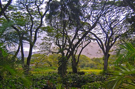 o tree in tropical trees o ahu hawai i fullmoon8