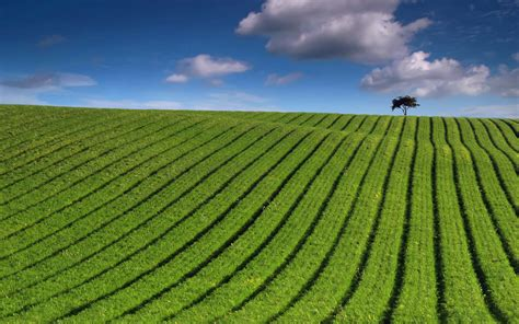 green landscape 1920x1200