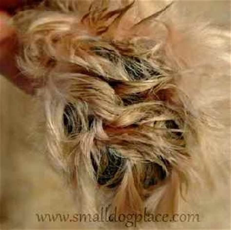 How To Treat Matted Hair by Matted Ten Tips For Removing Mats From Your